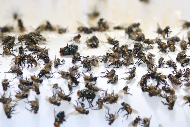 Muchas moscas son trampas del pegamento fotografía de archivo libre de regalías