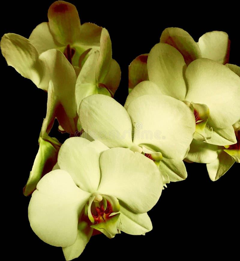 Muchas orquídeas para el amor imagen de archivo