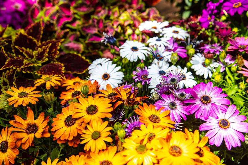 Muchas pequeñas flores en jardín soleado foto de archivo