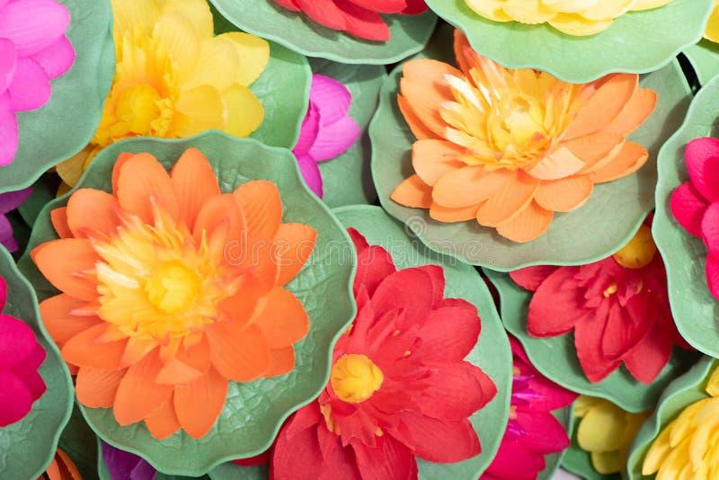 Muchas plantas coloridas del Aglaonema en el jard?n para el fondo imagen de archivo