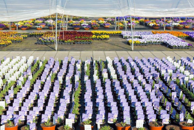 Muchas plantas con los precios en centro de jardinería holandés imagen de archivo