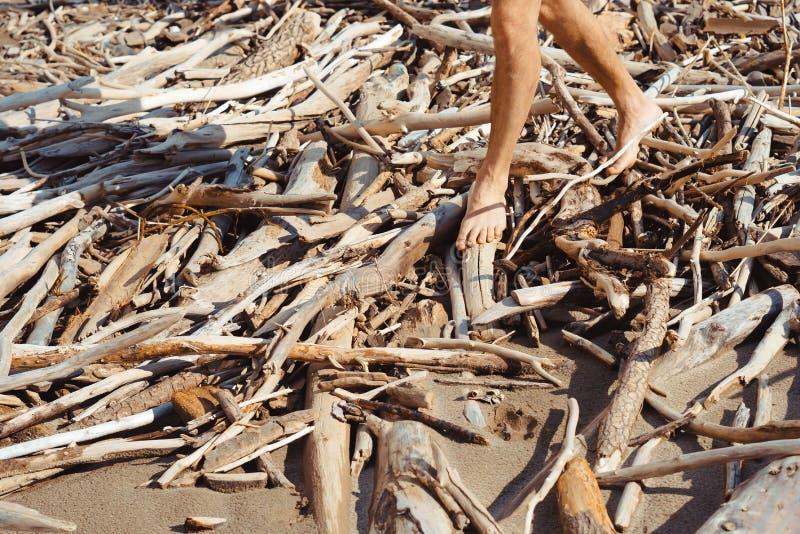 Muchas ramas en la orilla foto de archivo libre de regalías