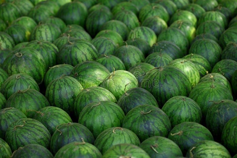 Muchas sandías verdes dulces grandes imagen de archivo libre de regalías