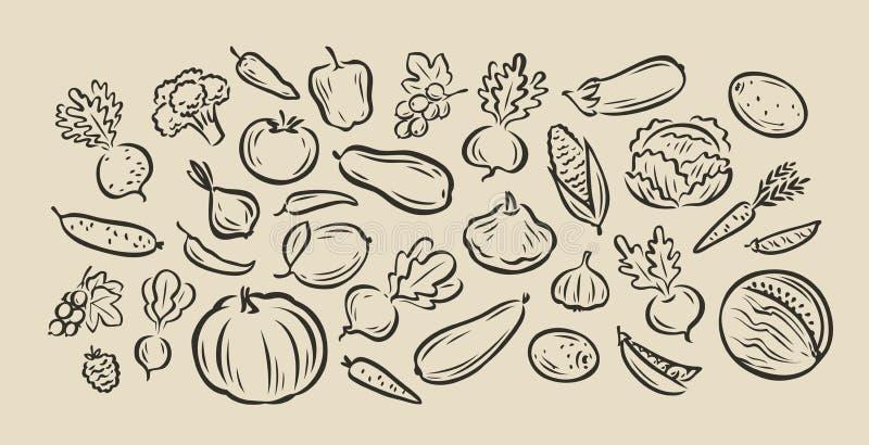 Muchas verduras hechas a mano. Dibujo vectorial de esbozo de alimento ilustración del vector
