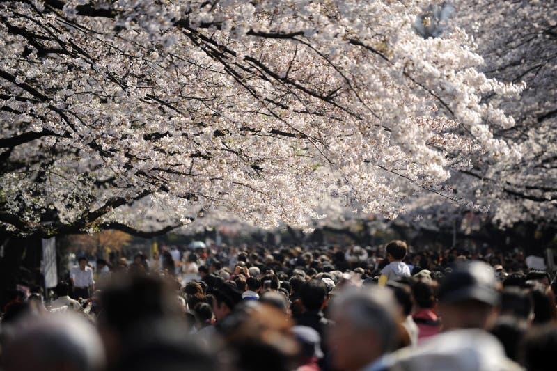 Muchedumbre de Tokio bajo cerezos fotografía de archivo