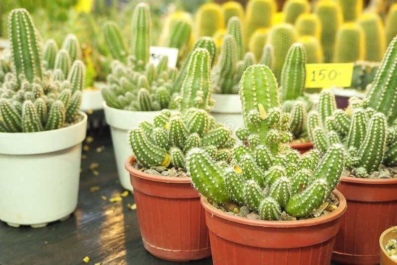 Muchedumbre del cactus foto de archivo libre de regalías