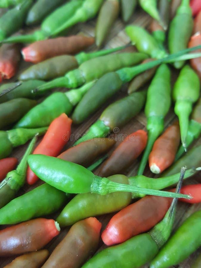 Mucho chile tiene chile rojo del chile verde y el multicolor el fondo es chiles del ojo del ` s del pájaro, Chili Texture, pimien foto de archivo libre de regalías