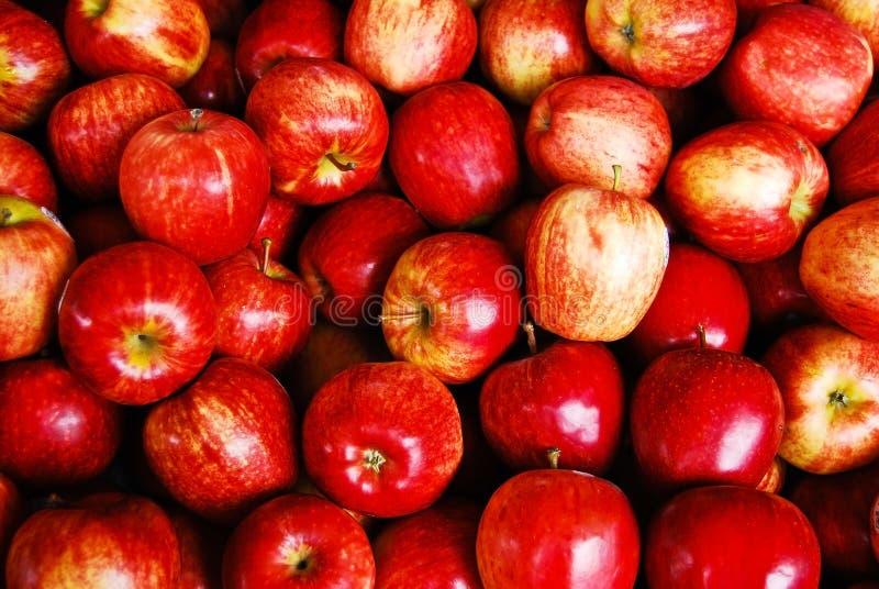 Mucho manzana roja en mercado fresco fotos de archivo libres de regalías