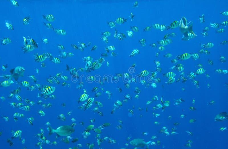 Mucho mar de pequeños pescados en la luz del sol fotos de archivo libres de regalías