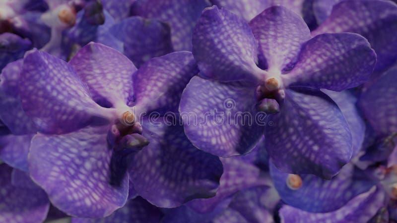 Mucho orchidea violeta, ejemplo determinado del fondo 3d de la flor de la orquídea foto de archivo libre de regalías