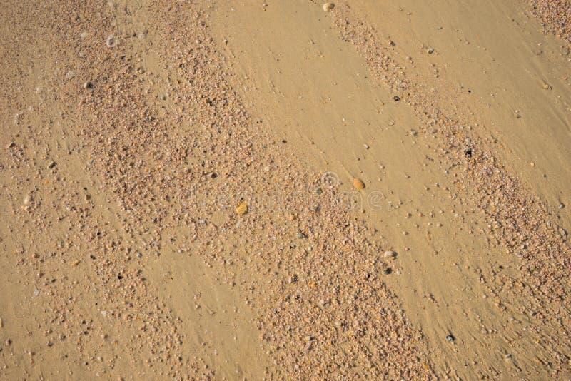Mucho pequeña cáscara de la grieta en la arena, para el fondo imágenes de archivo libres de regalías