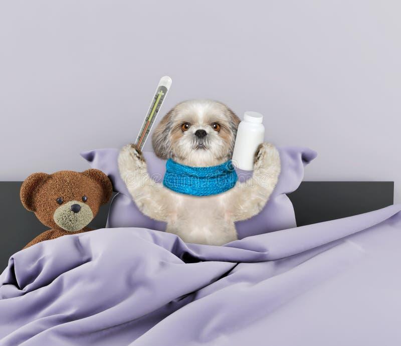 Mucho perro enfermo en cama foto de archivo
