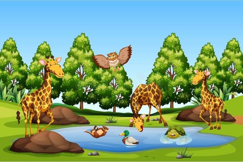 Muchos animales en la charca stock de ilustración