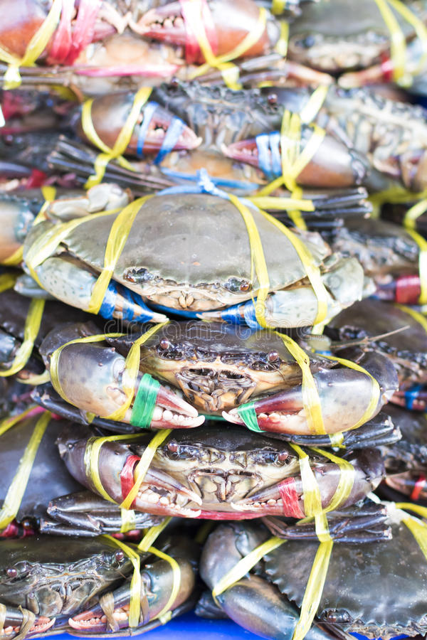 Muchos cangrejos frescos foto de archivo