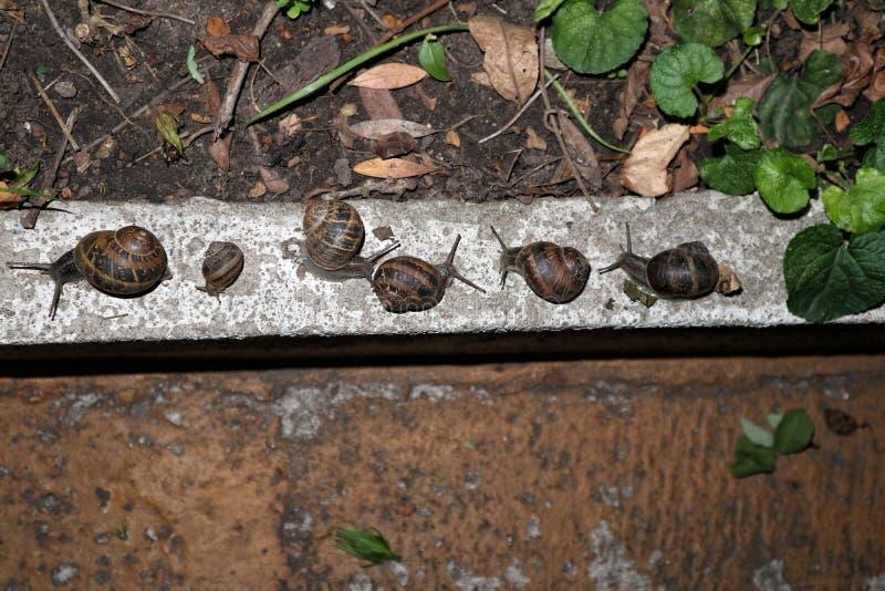 Muchos caracoles de jardín en el jardín, en el nigth imagen de archivo
