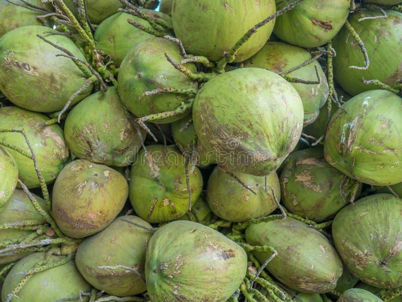 Muchos cocos verdes imagen de archivo libre de regalías