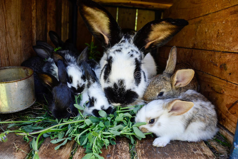 Muchos conejitos dulces jovenes en una vertiente Un grupo de pequeña alimentación colorida de la familia de los conejos en yarda  fotografía de archivo libre de regalías