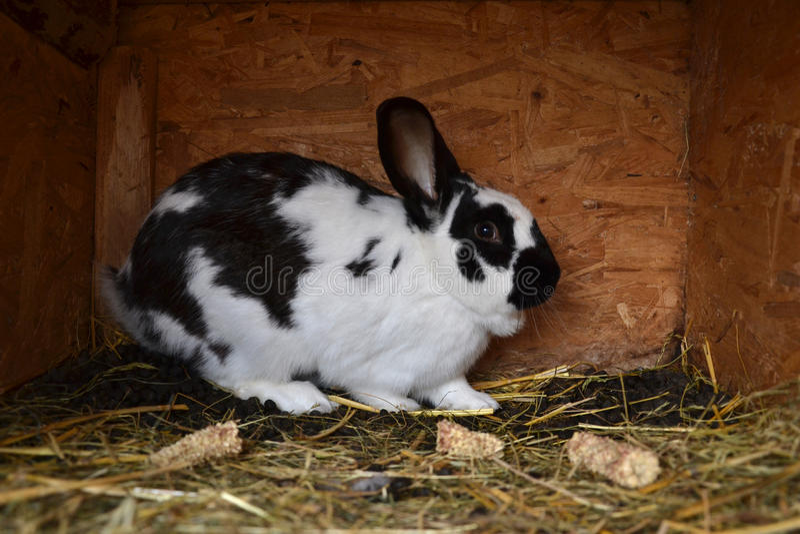 Muchos conejitos jovenes en una vertiente Un grupo de pequeños conejos alimenta adentro la yarda de granero Símbolo de Pascua imágenes de archivo libres de regalías