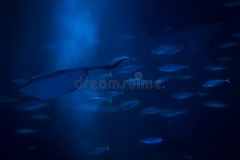 Muchos diversos pescados en acuario imagen de archivo