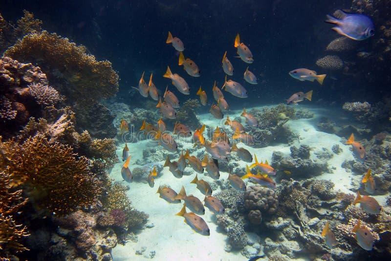 muchos diversos pescados en el mar fotos de archivo libres de regalías