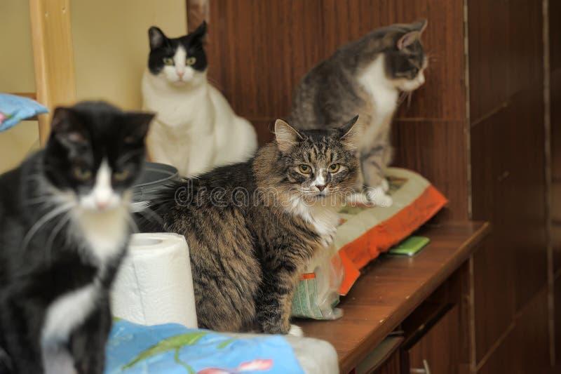 Muchos gatos fotografía de archivo