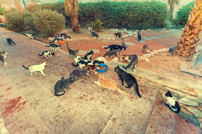 Muchos gatos en el parque fotografía de archivo libre de regalías
