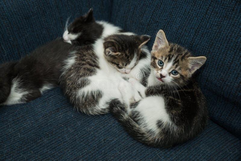 Muchos gatos que se relajan en el sofá imagenes de archivo