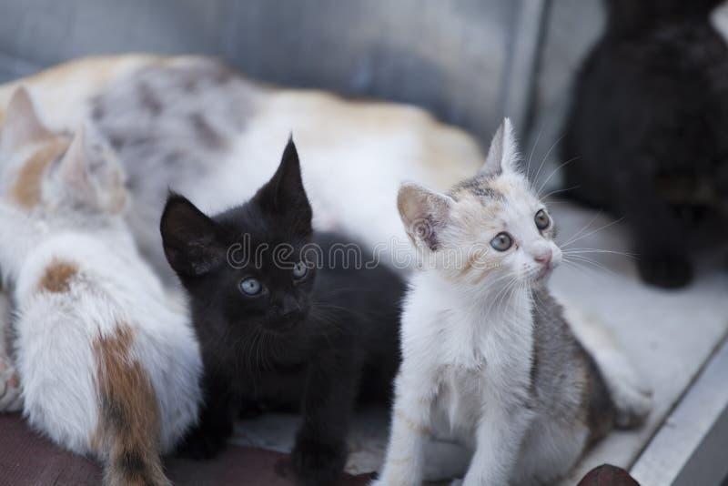 Muchos gatos que se sientan en fila fotografía de archivo