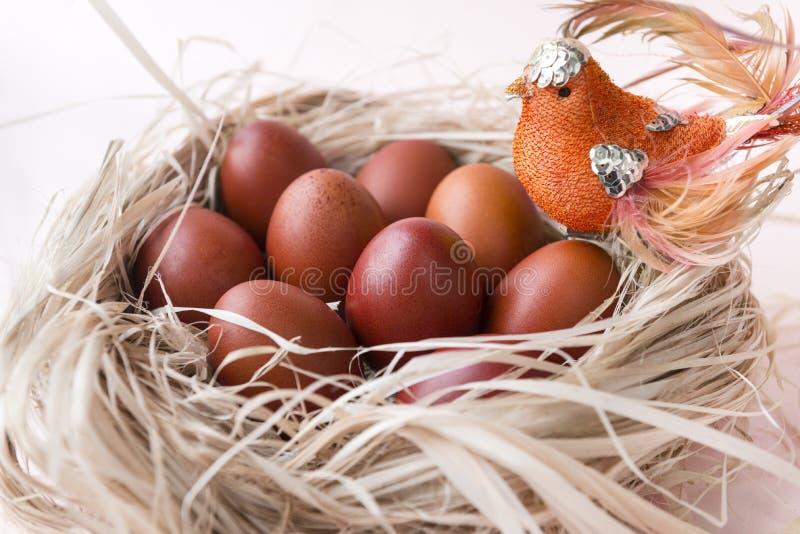 Muchos huevos de Pascua hervidos marrones en la jerarquía, pájaro fotos de archivo