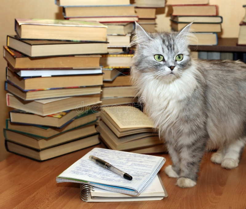 Muchos libros viejos y gato fotografía de archivo libre de regalías