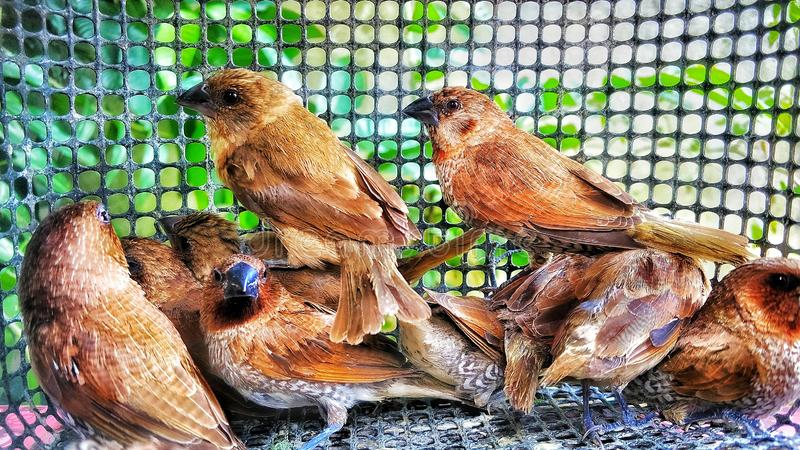 Muchos pájaros fueron cogidos fotografía de archivo libre de regalías