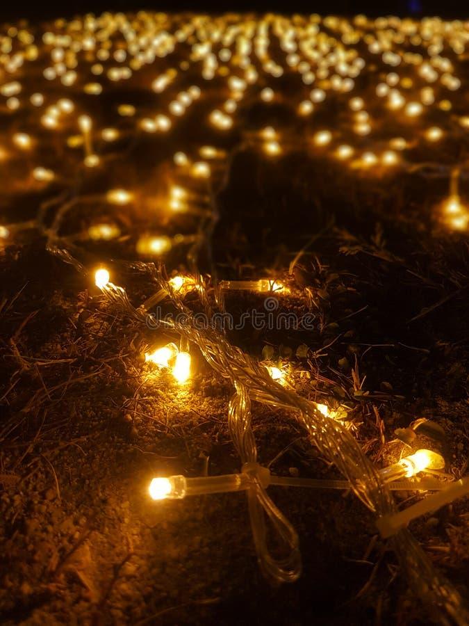 Muchos peque?os bulbos amarillos que se adornan en la hierba fotografía de archivo libre de regalías