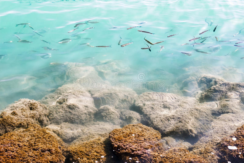 Muchos pequeños pescados en agua cerca del submarino mossed piedras foto de archivo