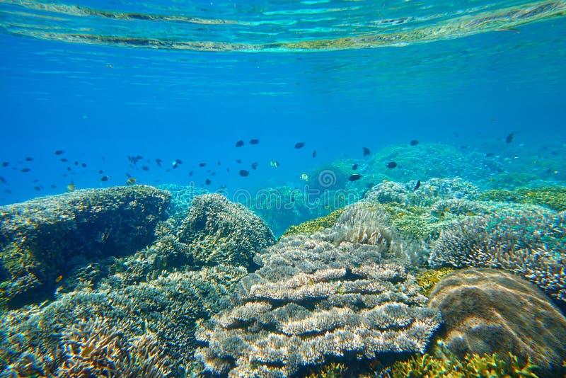 Muchos pequeños pescados sobre el arrecife de coral hermoso foto de archivo libre de regalías