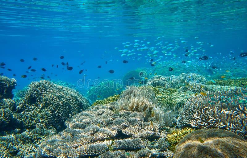 Muchos pequeños pescados vibrantes sobre un arrecife de coral hermoso fotos de archivo