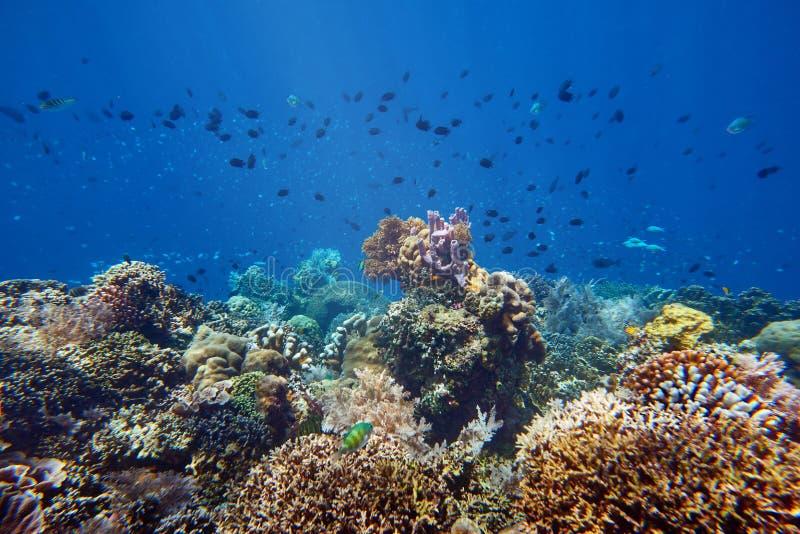Muchos pequeños pescados vibrantes sobre un arrecife de coral hermoso fotografía de archivo
