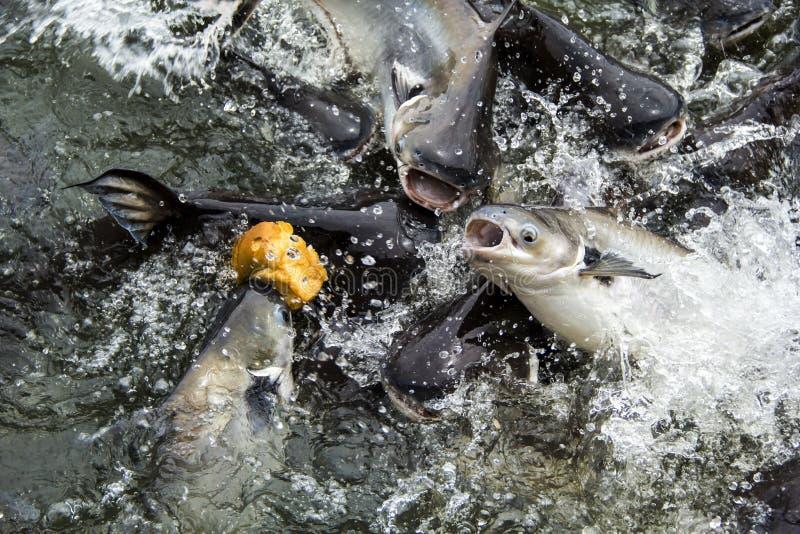 Muchos pescados fotografía de archivo libre de regalías