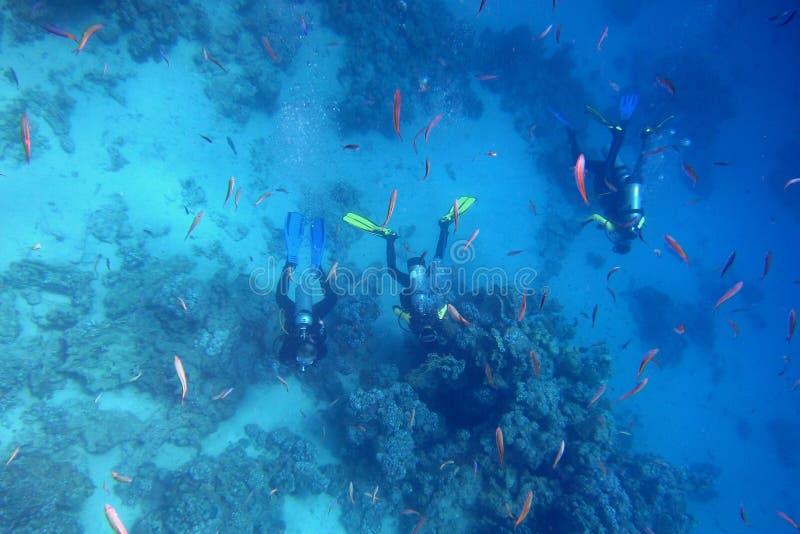 Muchos pescados y tres buceadores fotos de archivo libres de regalías