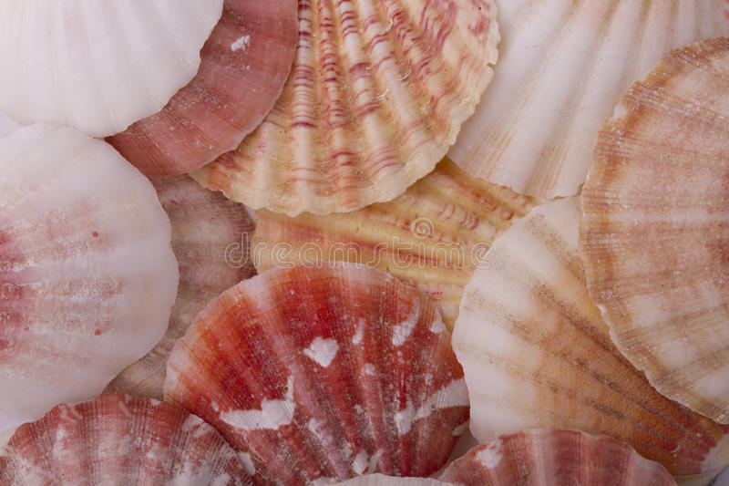 Muchos shelles imagen de archivo libre de regalías