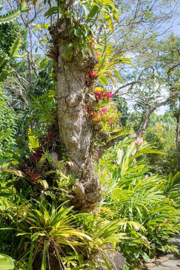 Muchos tipos de epiphyte tropical plantan el crecimiento en un tronco de árbol fotos de archivo