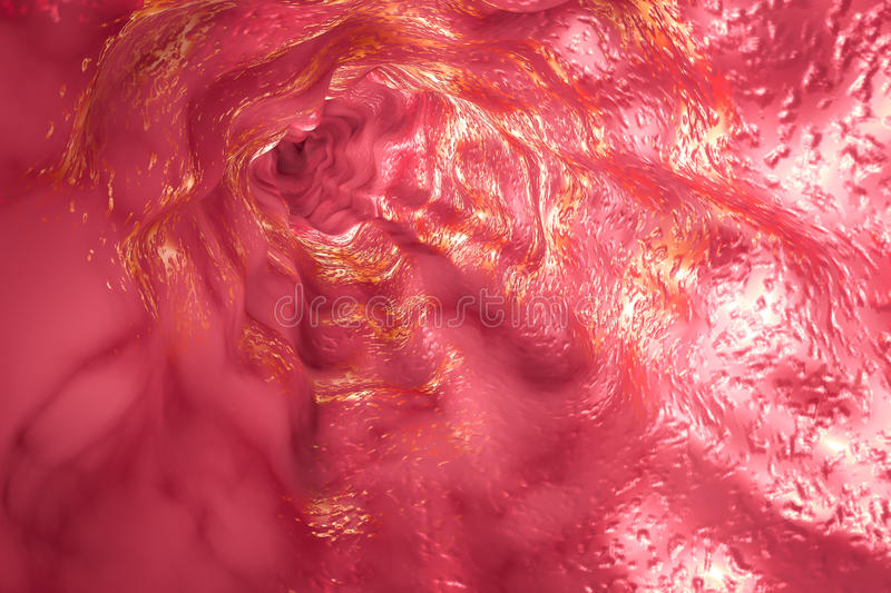 Mucosa d'oesophage et sphincter oesophagien illustration de vecteur