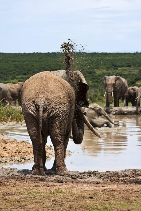Mud Bath royalty free stock image
