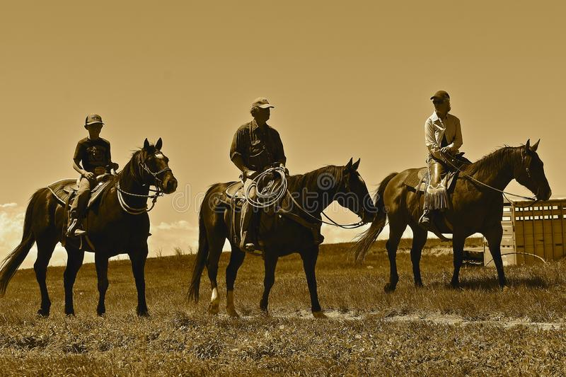 Cowboys heded to a roundup and branding sepia. MUD BUTTE, SOUTH DAKOTA, May 23, 2018: The annual roundup and branding of cattle brings the area cowboys and royalty free stock images