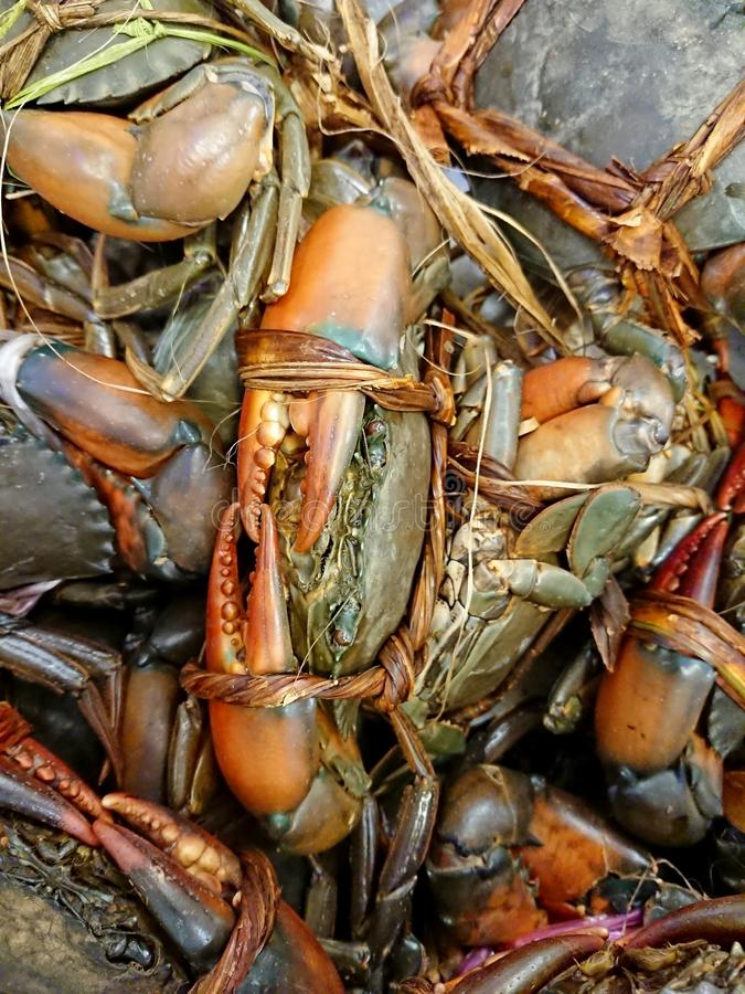 Mud crab sold in the market stock images
