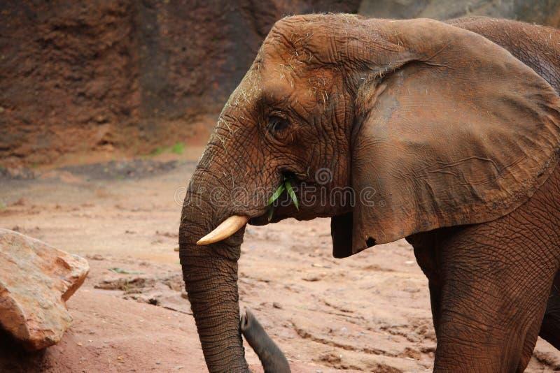 Mud Elephant royalty free stock photos