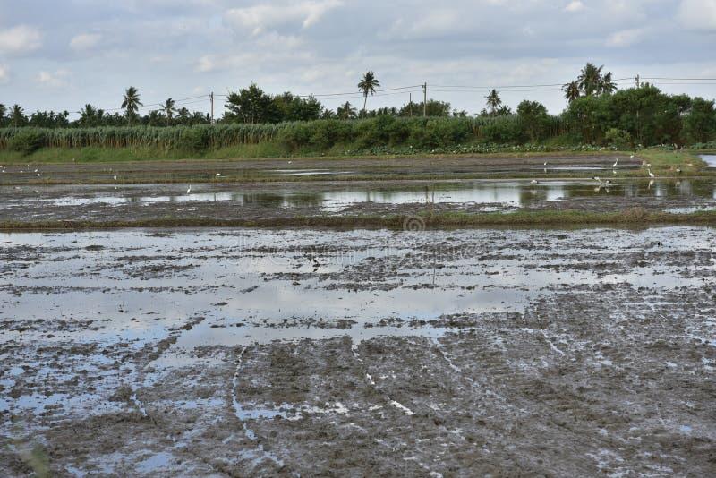 Mud på fälten och vid himlen royaltyfri fotografi