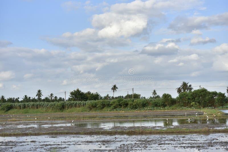 Mud på fälten och vid himlen royaltyfria bilder