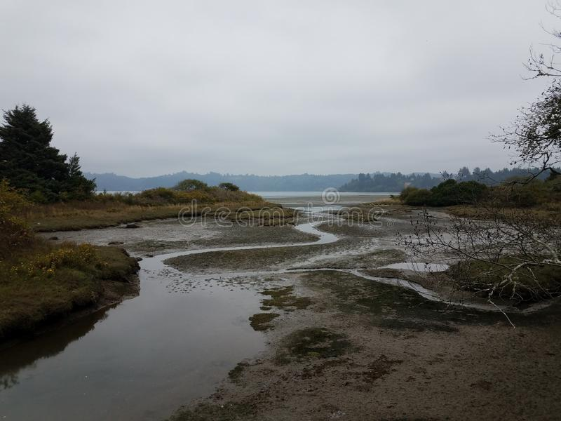 Mud and rivers and plants in wetland area in Newport, Oregon. Mud and rivers and plants in wetland or marsh area in Newport, Oregon stock image