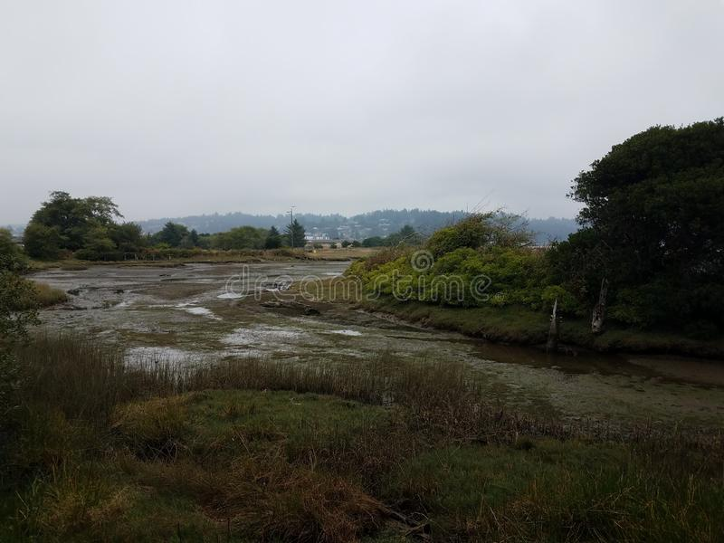 Mud and rivers and plants in wetland area in Newport, Oregon. Mud and rivers and plants in wetland or marsh area in Newport, Oregon stock photography