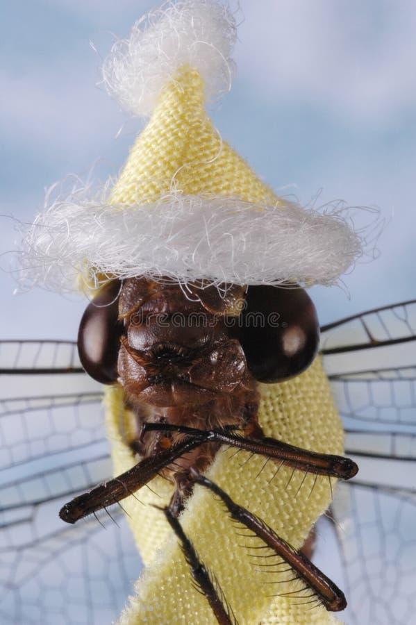 Mudança de clima - mosca do dragão fotografia de stock royalty free